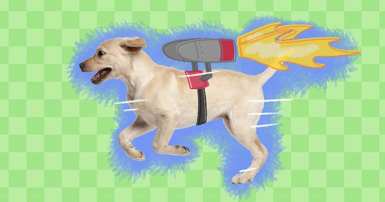Dog Zoomies