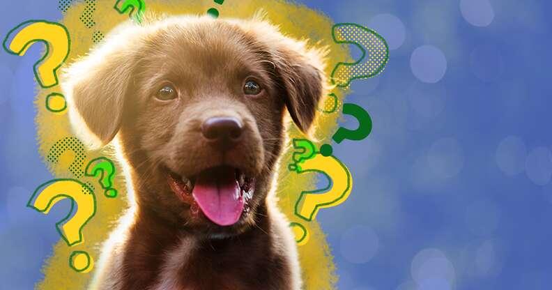 should i spay or neuter my dog