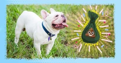 best dog poop bags on amazon