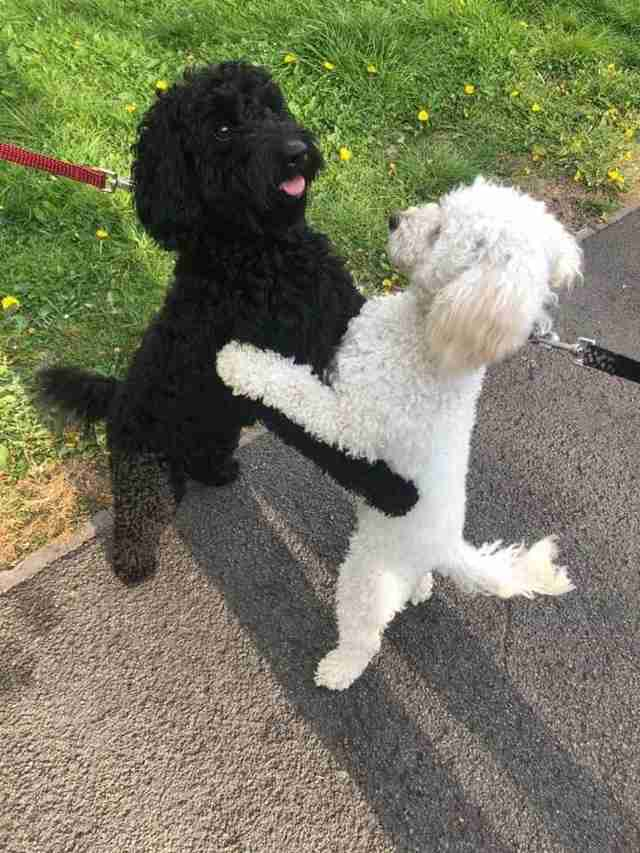 Dog siblings recognize each other on the street