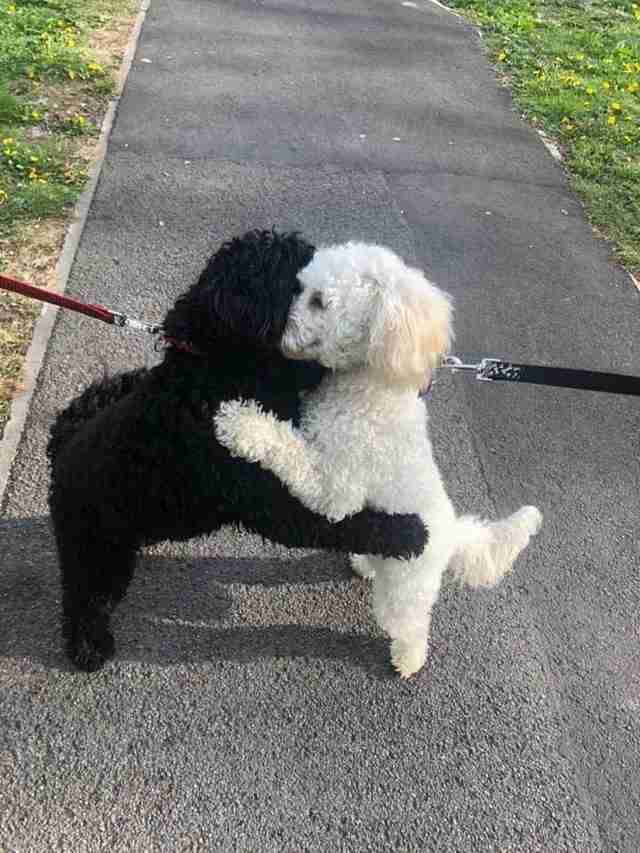 Dog siblings reunite on the street