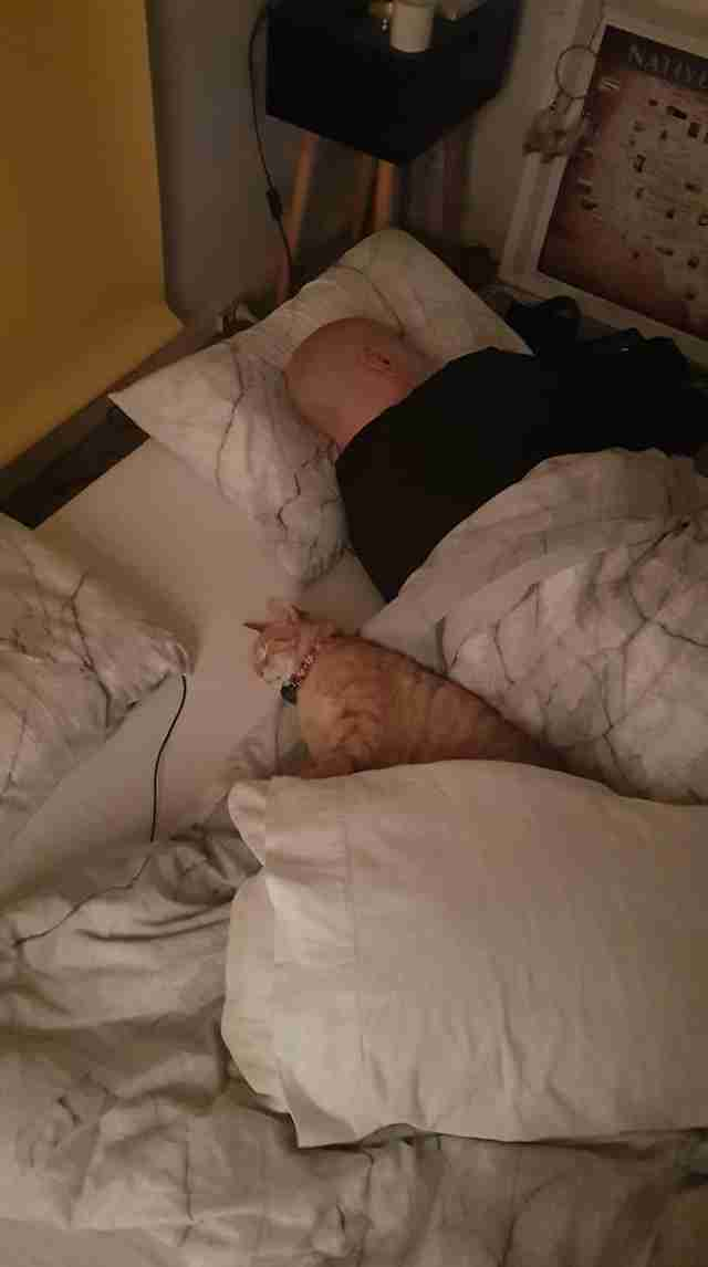 cat sleeps over