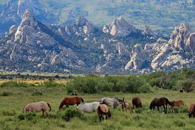 horses in a grassy plain with towering rocks in the distance