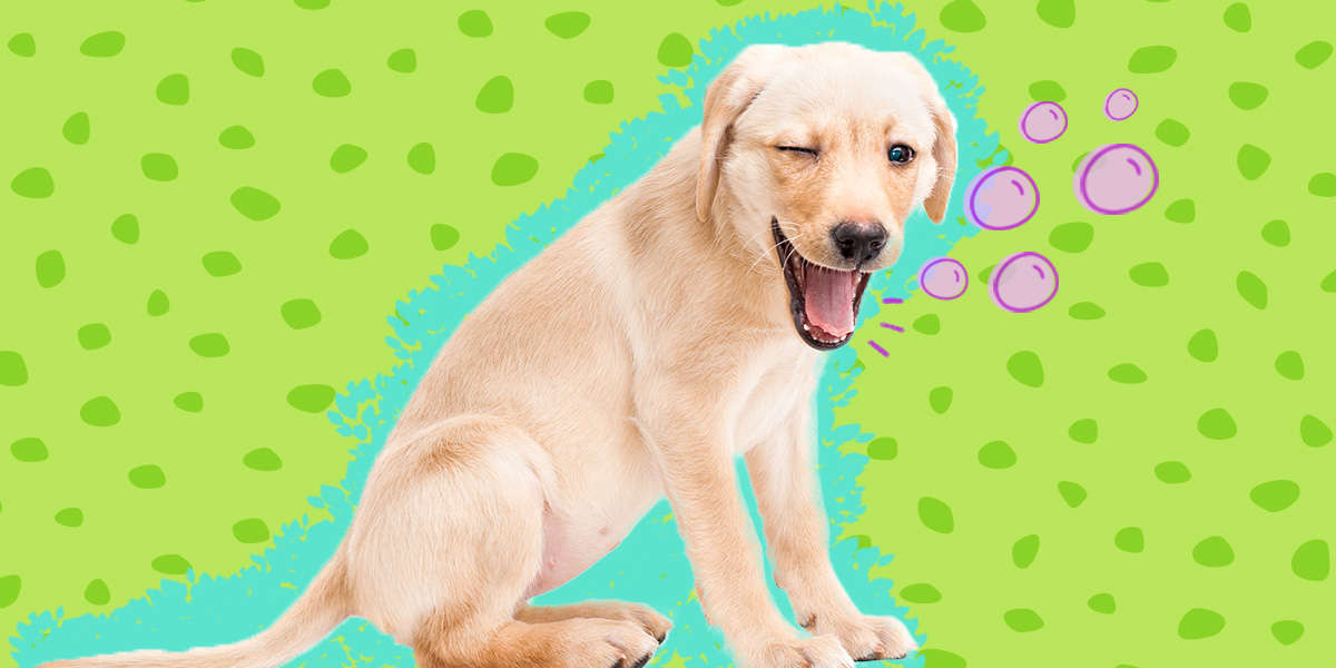 Dog Hiccups Are Adorable — But Are They Normal?