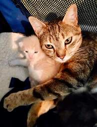 Mama stray cat reunites with kittens