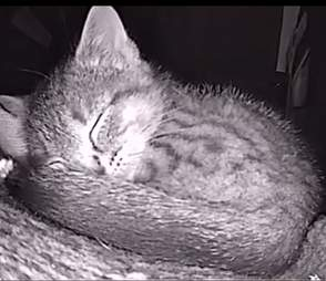 Cat cam captures photos of sleeping strays