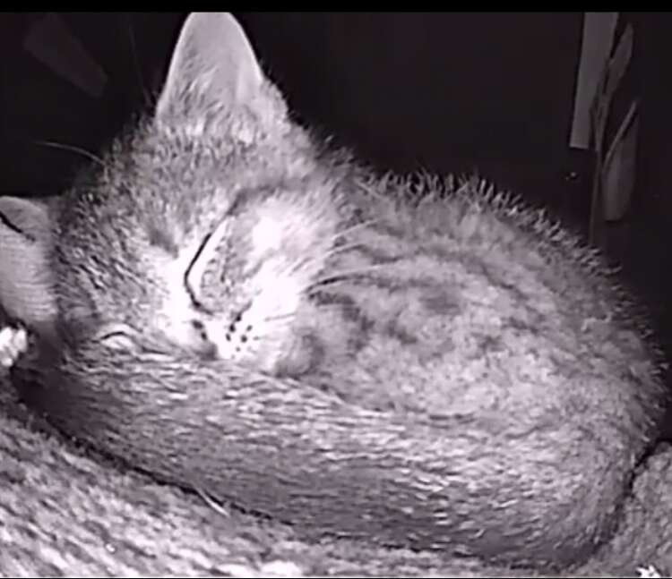 Cat cam captures photos of sleeping strays