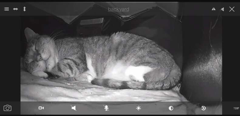 A stray cat secretly photographed in her cat house