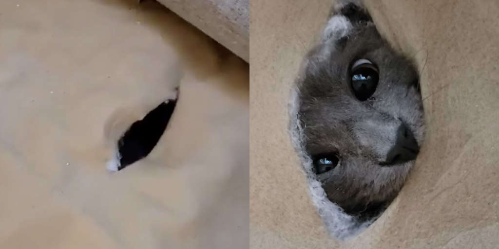 Mischievous Cat Gets Stuck Inside Hole She Chewed In The Couch
