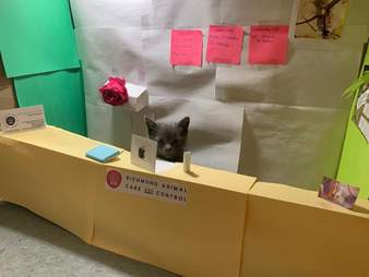 A shelter kitten prepares for her Zoom meeting