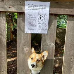 Dog gets a sign on her fence