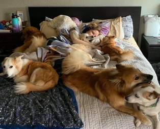 400 foster animals family