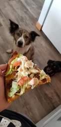 dog food photos