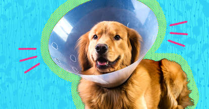 what does it mean to neuter a dog