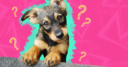 5 most common dog myths