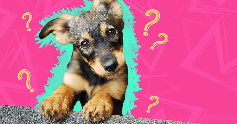 5 most common dog myths