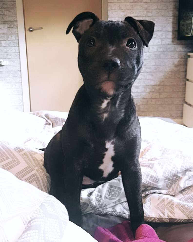 Beau the dog sits on the bed