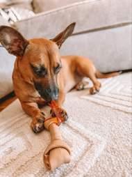 dog loves smartbones