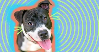 Happy rescue dog