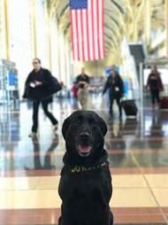 TTirado the detection dog working for the TSA