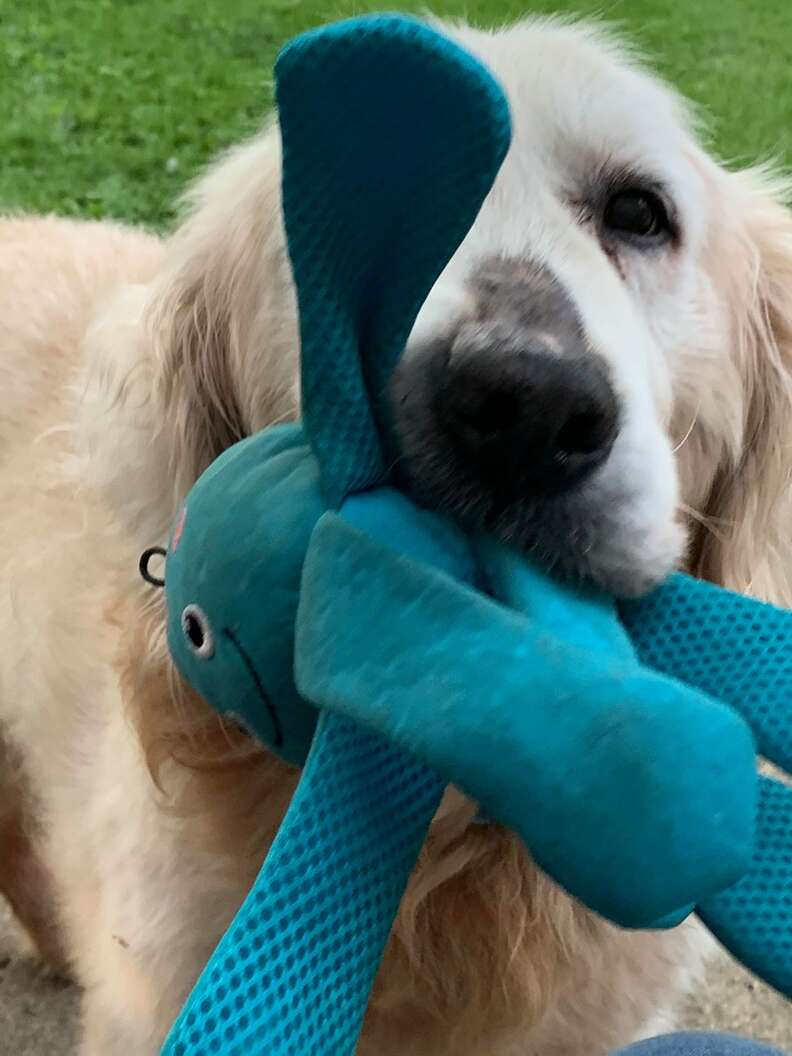 Theo the dog and his special octopus toy