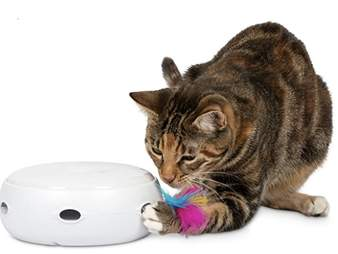 Cat with electronic toy