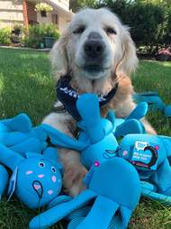 Dog gets ten of his favorite stuffed toys