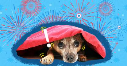 how to keep dog safe 4th of july