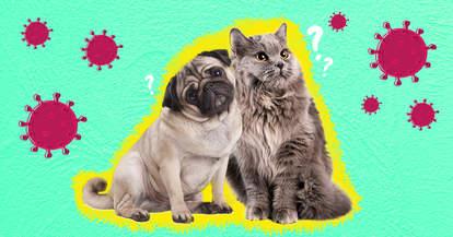 can my dog or cat get coronavirus