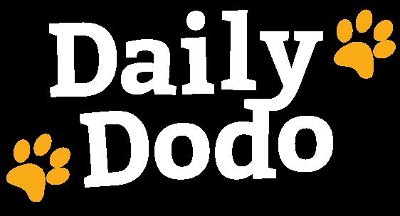 Daily Dodo