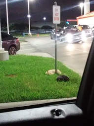 two dogs saved brownsville tx