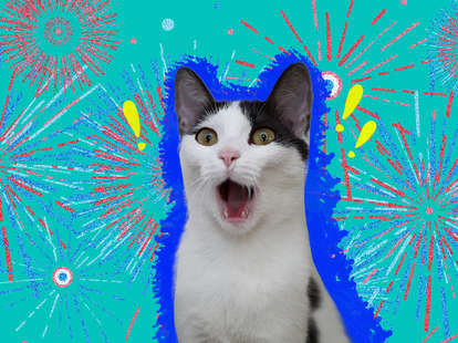 how to keep cat calm 4th of july