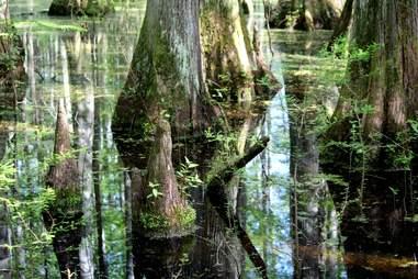 Cache River Wetlands