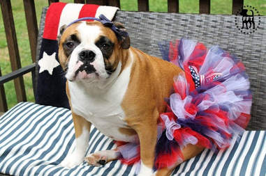 dog tutu 4th of july