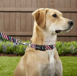 4th of july dog leash