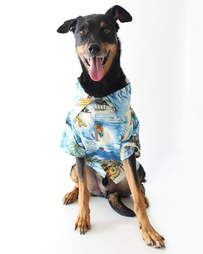 dog button up shirt