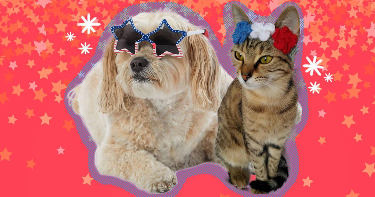 Summer dog bandana Fourth of July lemons pink spring dog bandana lemonade 4th of july. cat bandana