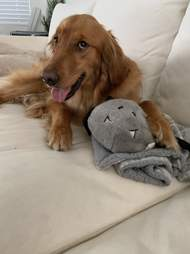 Dog with stuffed animal toy