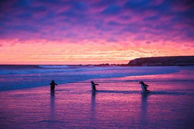 Volunteer Point, îles Falkland