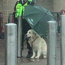 Dog sheltered from rain by security guard