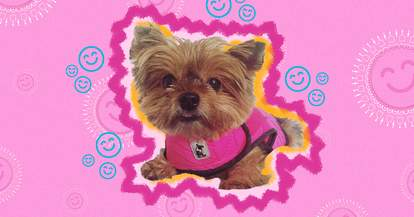 Dog wearing ThunderShirt