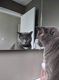 Loki the cat stares at his reflection in the mirror