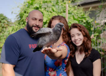 family rescues pigeon