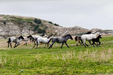 Wild horses running through a field