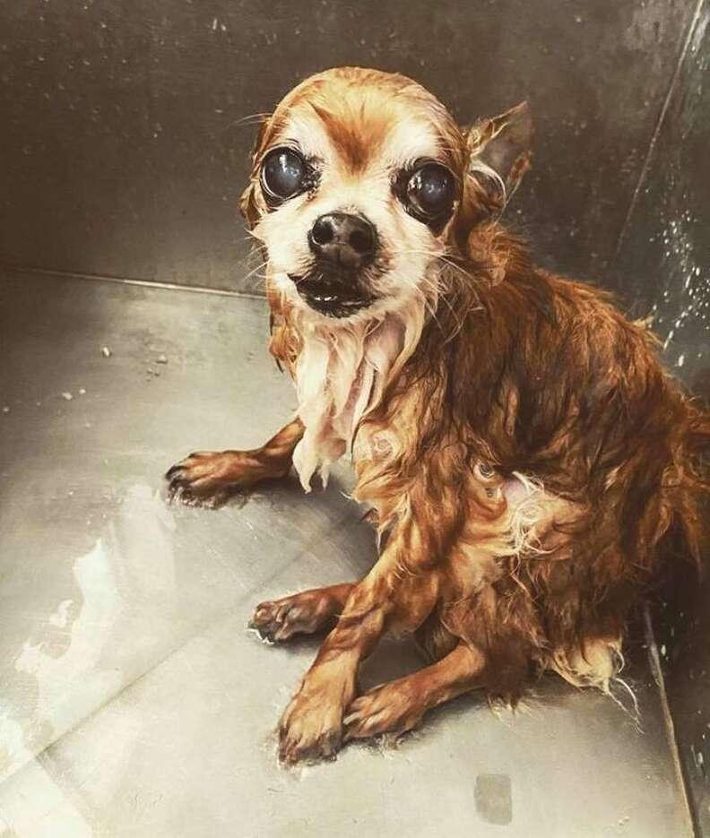 dog hates baths