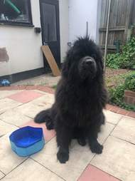 Dog gets a pool that's too small