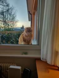 cat hears blinds
