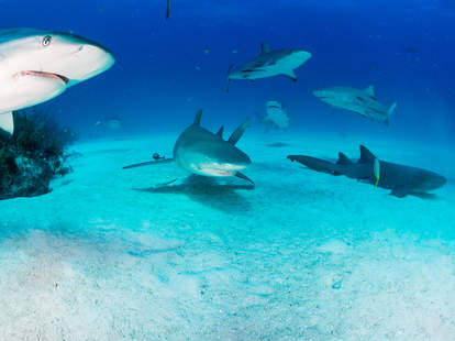 paid to watch shark week