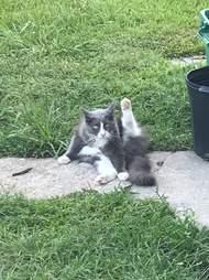 Kleptomaniac cat steals laundry