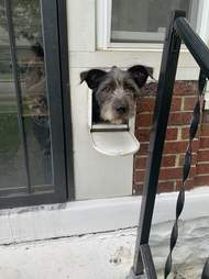Dog in mailbox surprises mailman